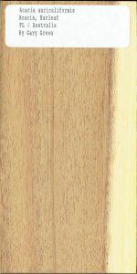 Acacia-Auriculiformis-Acacia-Earleaf