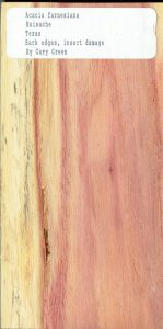 Acacia Farnesiana Huisache Wood Sample