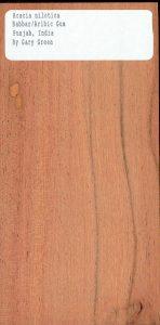 Acacia Nilotica Babbar Aribic Gum Punjab India