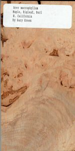 Acer Macrophyllum Maple Bigleaf Burl N California