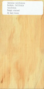 Aesculus Californica Buckeye California Fungal Stain