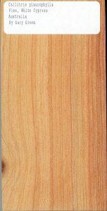 Callitris Glaucophylla Pine White Cypress Australia