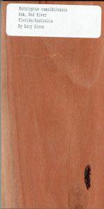 Eucalyptus Camaldulensis Gum Red River Florida Australia