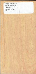Fagus Grandifolia Beech American Indiana