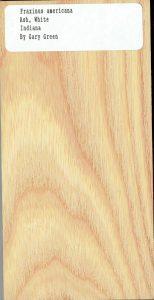 Fraxinus Americana Ash White Indiana