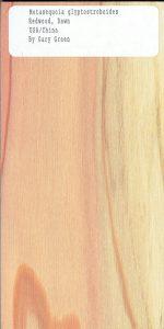 Metasequoia Glyptostroboides Redwood Dawn USA China