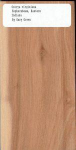 Ostrya Virginiana Hophornbean Eastern Indiana