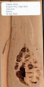 Pimenta Dioica Allspice Tree-Pippy Burls Costa Rica Defects