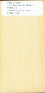 Pinus Ponderosa Pine Ponderosa-Bear Scratch Western USA