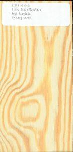 Pinus Pungens Pine Table Mountain West Virginia