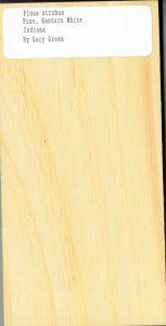 Pinus Strobus Pine Eastern White
