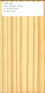 Pinus spp Pine Southern Yellow S United States